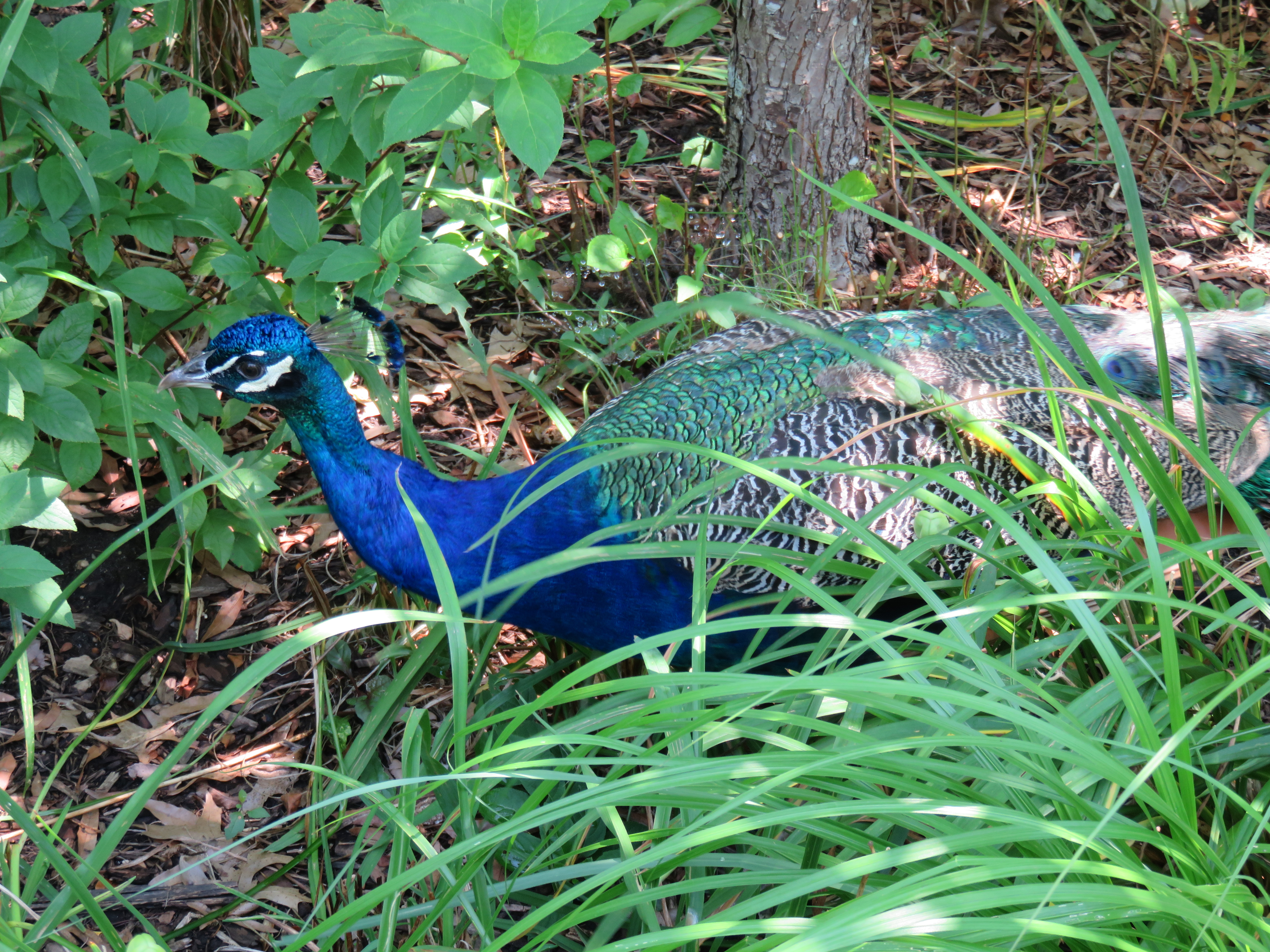 Unexpected Treasures At Prospect Park Zoo Finding Nyc